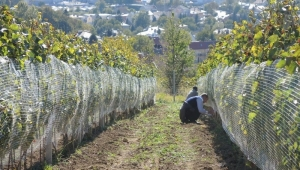 Akcyza, dozwolone praktyki enologiczne, winnica i przetwórnia