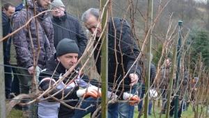 Ogłaszamy nabór do Studium Praktycznego Winiarstwa 2017