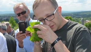 Choroby i szkodniki winorośli - jak zapobiegać i zwalczać